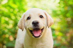 Puppy training program for new and young puppies