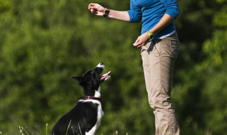 Dog Obedience Training Welland